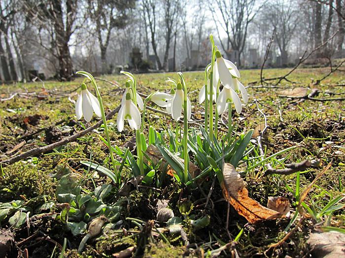 Frühling Perlacher Friedhof 2011