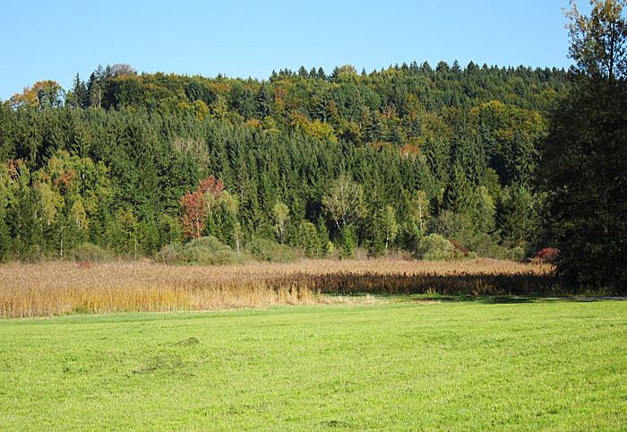 Schilfgebiet südlich vom Deininger Weiher