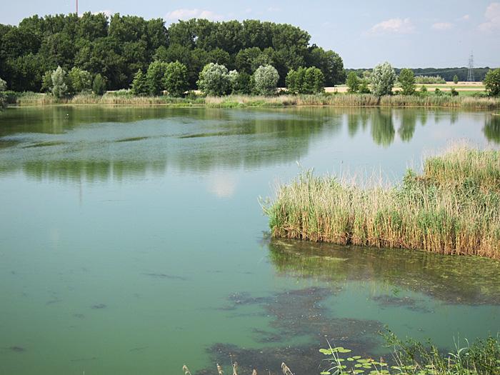 vogelschutzgebiet_garstadt_juli2013_0150
