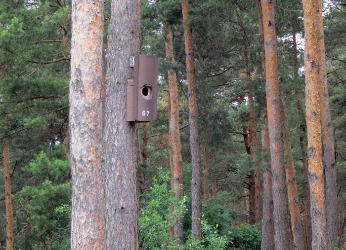 feldlerchen im mallertshofer holz birding mit waltraud. Black Bedroom Furniture Sets. Home Design Ideas