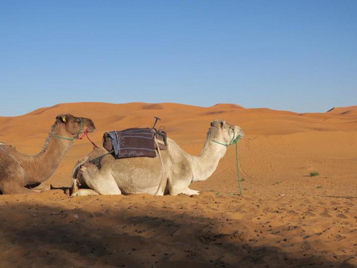 16_erg-chebbi_marokko_jan2017_1309