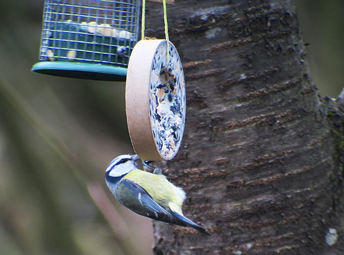 gro es meisentreffen und ein gimpel paar im perlacher forst birding mit waltraud hofbauer. Black Bedroom Furniture Sets. Home Design Ideas