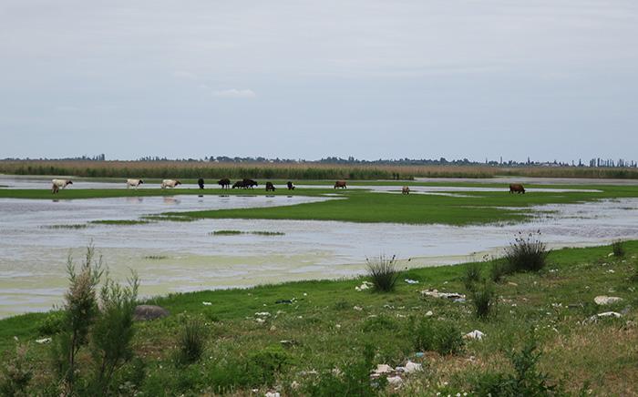 14_gizil-agach_nationalpark_aserbaidschan_2018-06-02_7209
