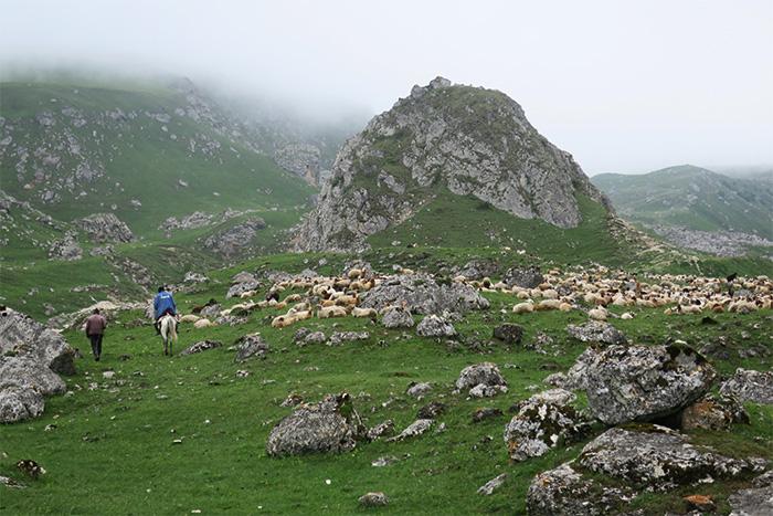 19_schafherde_shahdagh_nationalpark_aserbaidschan_2018-05-29_5850