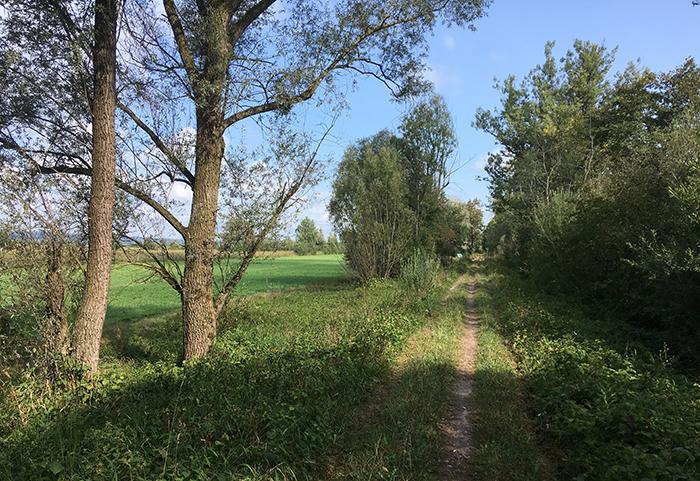 01_weg_zum_binnensee_2018-08-26_1168