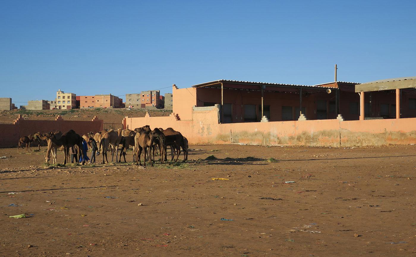 26_kamelmarkt_guelmim_marokko_2018-11-27_5086