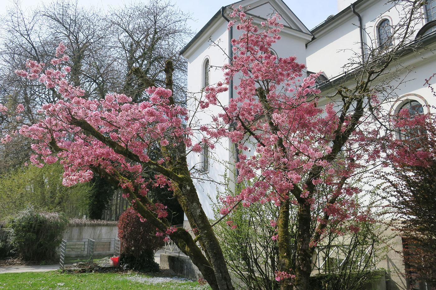 03_fruehling_ostfriedhof_2019-04-06__8568