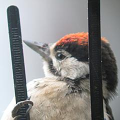 Balkonvögel im Sommer
