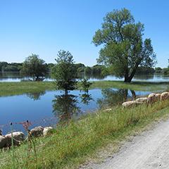 Biosphärenreservat Flusslandschaft Elbe-Brandenburg