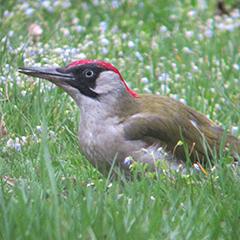 Vogelfrauen und Nestbau im Ostfriedhof